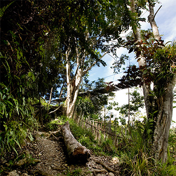 Long Term Health Benefits of Walking Kokoda